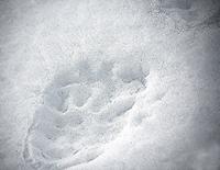 Karhun Tassun Jälki